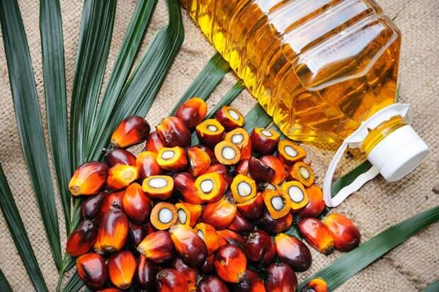 С пальмовым маслом наведут порядок