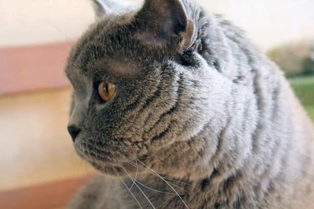 Жительница Марфина призывает неравнодушных горожан помочь больному коту