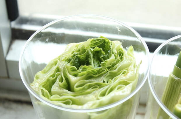 Растим зелень дома: салат всегда свой и свежий