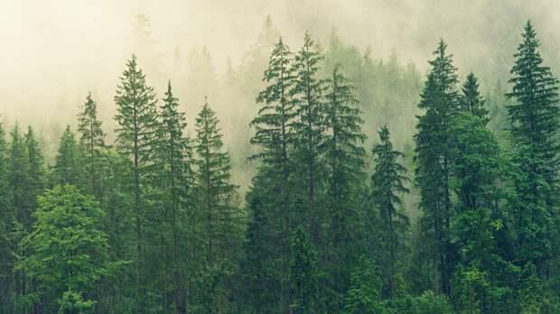 Правоохранители задержали контрабанду леса из Приморья в Китай