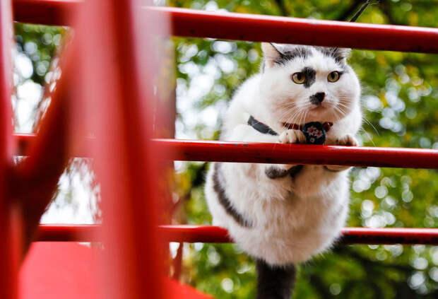Хозяину кота предлагали за него почти полмиллиона и машину. Мужчина ответил отказом
