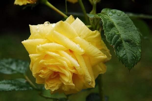 розы фото 170320 – 14