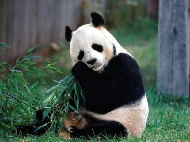 10 самых жестоких матерей среди животных