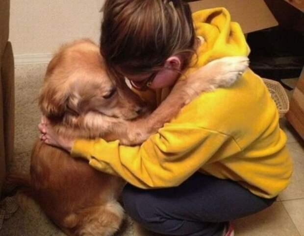 собаки обнимаются, собака обнимается с хозяином, собачьи объятия
