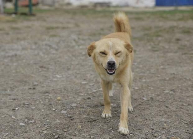 На Кубани ответственность за приюты для животных переложили на глав муниципалитетов