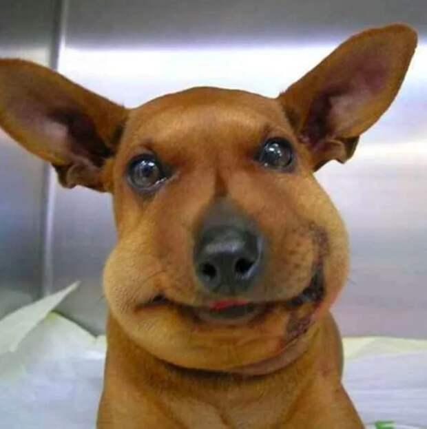 Собаку укусила пчела или оса. Что делать?