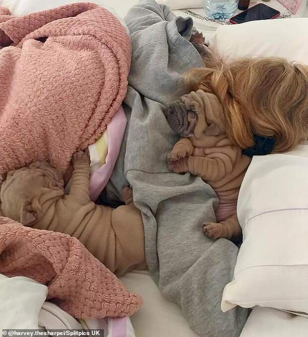 Вдруг скомканное одеяло зевнуло и открыло глазки