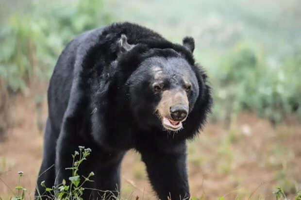 """Медведица, выползающая в траву на животе… Она не может поверить, что свободна, – ведь ради призрачного """"лекарства от всего"""" её мучили 10 лет!"""