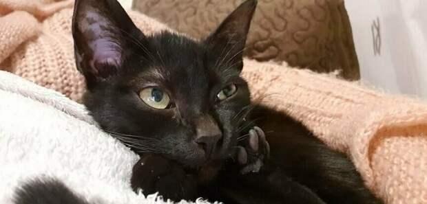 Сейчас кошка здорова, энергична и полна жизненных сил домашний питомец, животные, забота, кошка, спасение