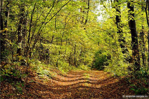 Давайте погожим осенним днем совершим прогулку