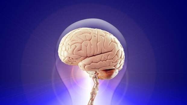 Российские ученые подтвердили связь между активностью мозга и уровнем интеллекта