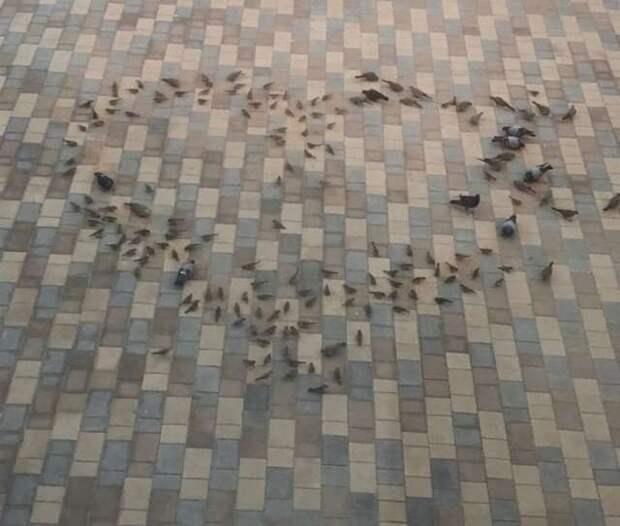 Любовь и голуби домашние животные, животные, кошка, прикол, свинья, собака, юмор