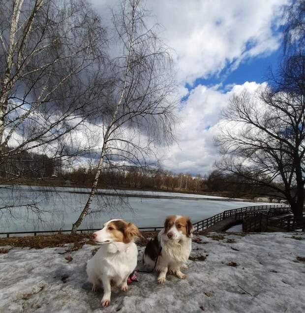 Фото дня: Фото дня: собаки-близнецы встречали весну в Джамгаровском парке