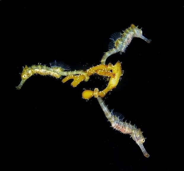 Захватывающие фото, победившие на ежегодном конкурсе подводной фотографии