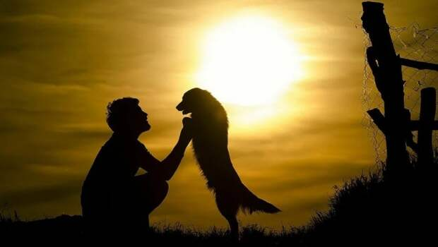 Ветеринар помог собаке, и та сама решила, что он будет ее новым хозяином