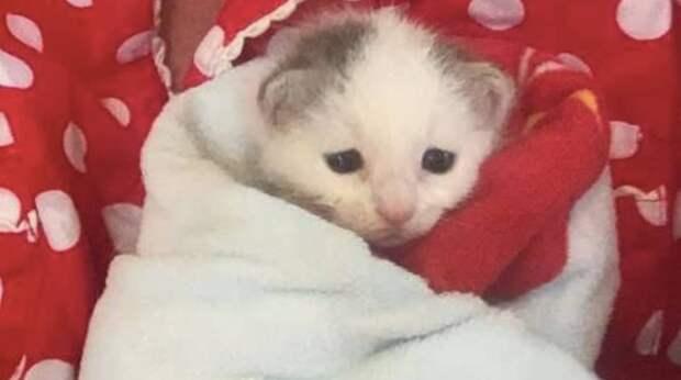 Из бревна послышался плач. Одинокий и слепой котёнок звал маму, которая так и не пришла