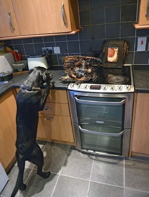 Пес крадет еду