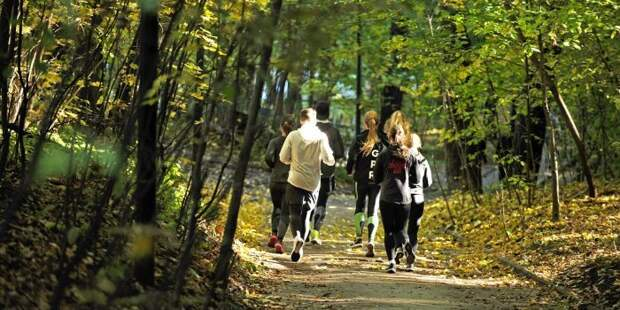 В парке «Ангарские пруды» каждую субботу будут проходить бесплатные забеги