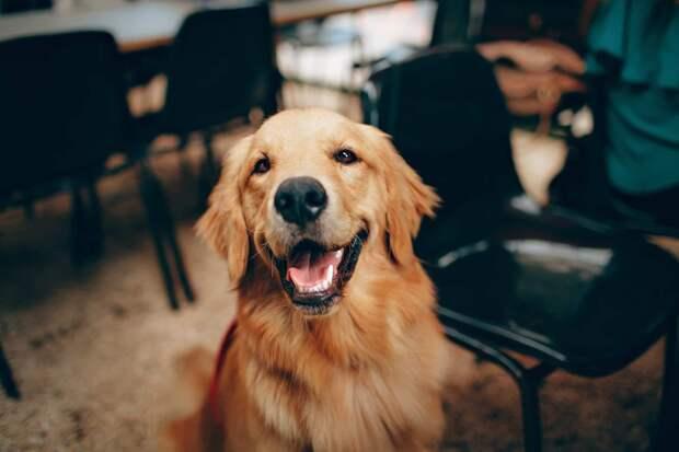 3 собачьих качества, которых не замечают владельцы