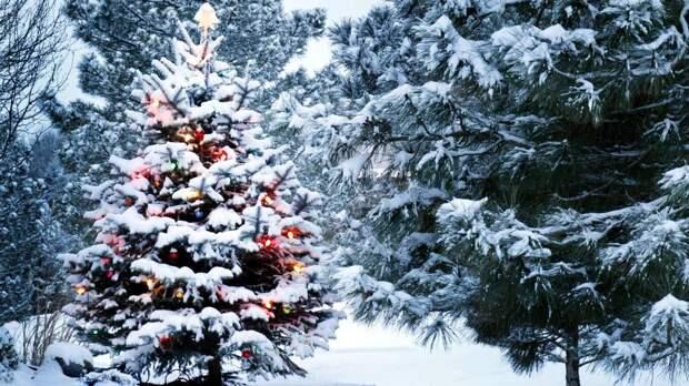 Погода в Украине на Новый год 2022: будет ли зимняя сказка?