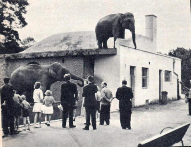 ВПольше слонам будут лечить стресс марихуаной, ноэффекта придется ждать долго