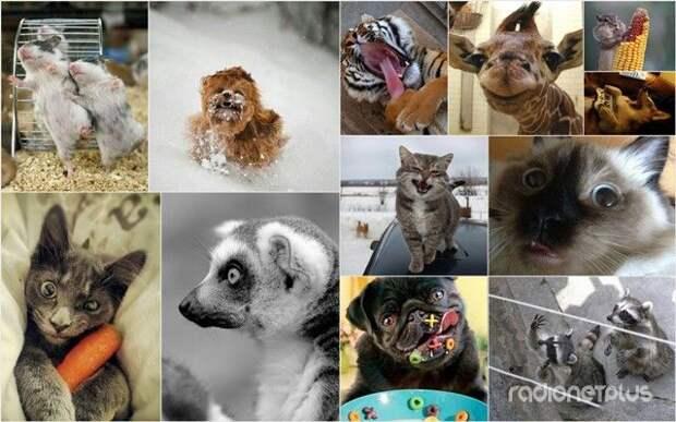 Эти смешные животные )