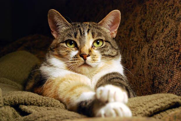 Если кошка пришла в дом... Как привлечь деньги: ритуал «Денежный путь»