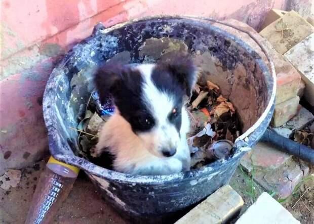 Крошка-щенок жил на свалке в ведре. Но даже там для него пожалели место