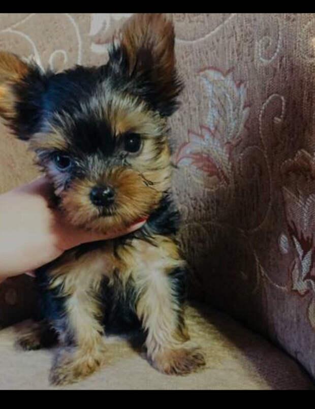 Подарили Маме щенка за 50.000 рублей, а он оказался на улице
