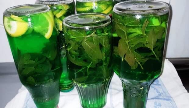 Мохито на зиму готовлю 6 литров сразу: хоть с мятой, хоть с мелиссой! Ароматный и свежий напиток