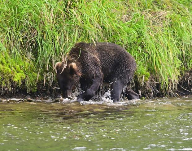 Небольшой фоторепортаж о дикой природе Камчатки