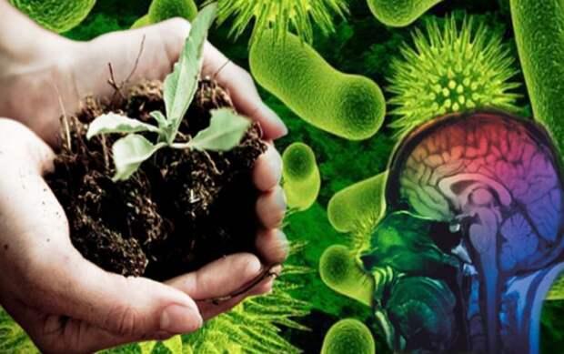 антидепрессанты в почве 3: Органическое земледелие, пермакультура