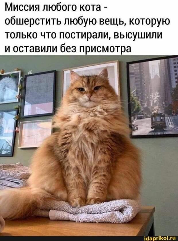 Возможно, это изображение (кот и текст «миссия любого кота- обшерстить любую вещь, которую только что постирали, высушили и оставили без присмотра idaprikol.ru»)