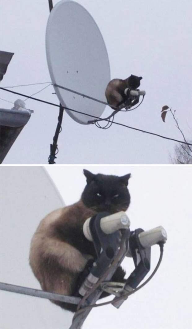 Ох, уж эти кошки!)
