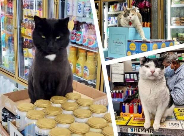 10+дерзких котов, для которых магазин как дом родной, где они чувствует себя хозяевами