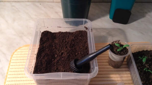 Этот способ выращивания рассады проверен временем и мной!