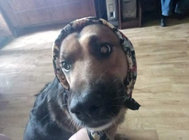 собака в платке