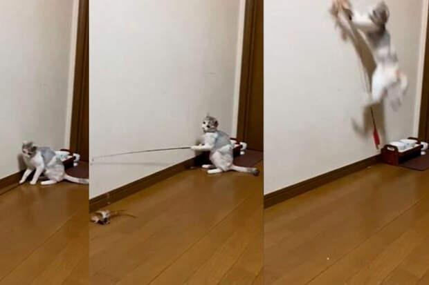 «Всё приходится самому»: кот придумал себе развлечение ивосхитил соцсети