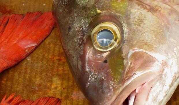 Рыбы массово гибнут вводоемах Карелии