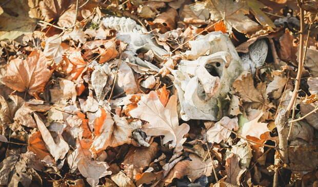 Страшная находка. Омичи нашли напустыре гору костей