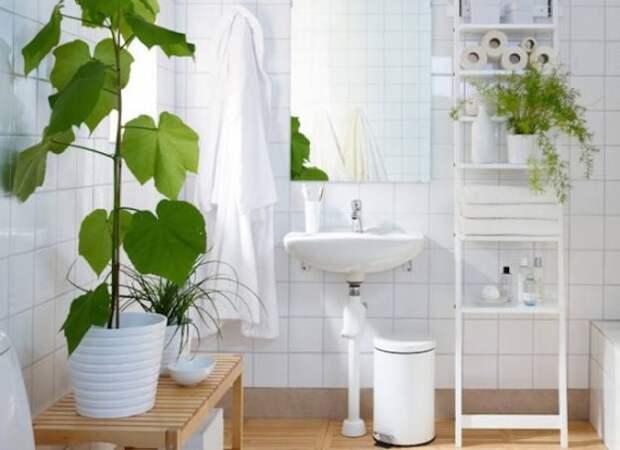 Восемь растений, которые хотят жить в вашей ванной комнате: Блог им. shance