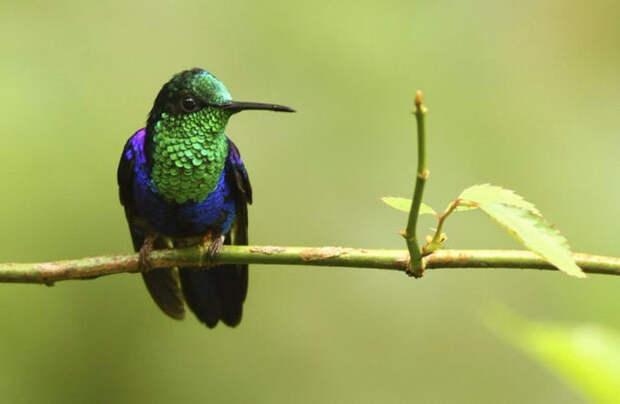 Birds_19 (700x457, 135Kb)