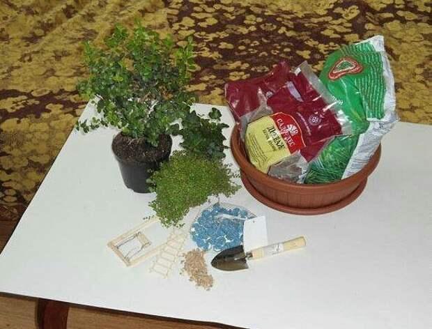 Настольный микро-сад (diy)