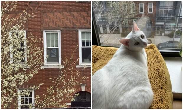 Как парень с девушкой из Нью-Йорка познакомились благодаря коту и карантину