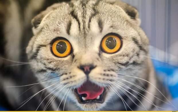 Кошек нельзя отгонять, когда они трутся об тебя