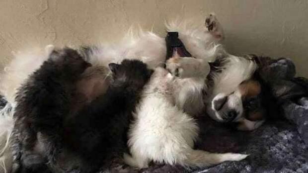 Маленькие котята как могли, согревали и оберегали свою больную сестренку и вскоре у них появилась очень необычная мама