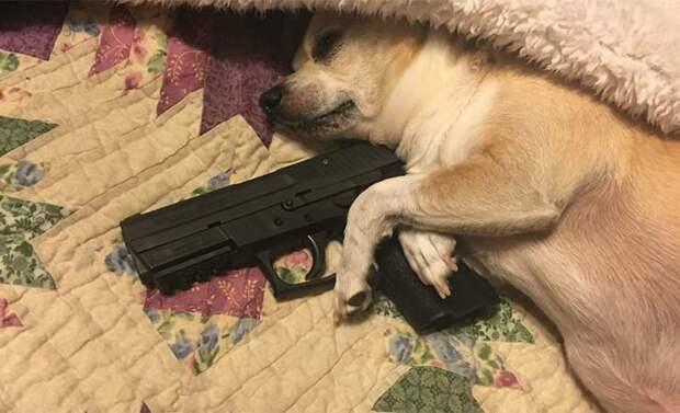 В США собака прострелила женщине ногу