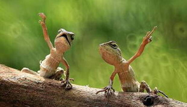 Лягушки - указательницы