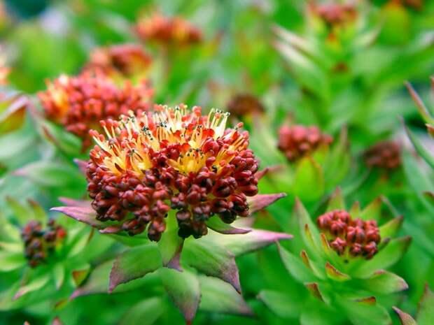 Многолетние растения: Лучшие виды и идеи для роскошного сада!