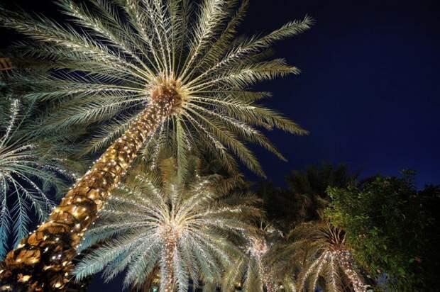 Пальма с гирляндами